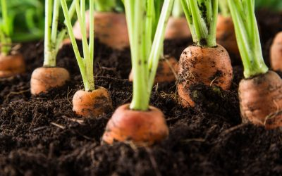 Top 10 Edible Plants You Can Grow In April – Direct Sow Edition