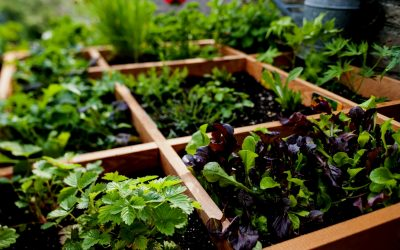 Square Foot Gardening Tools Page