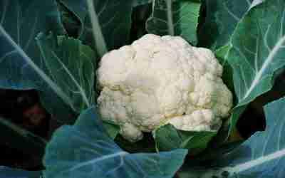 Cauliflower Growing Guide