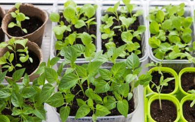 What Plants Should You Start Indoor Each Month?  We'll Show You!