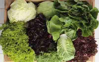 What Plants Should You Start Indoor in October?